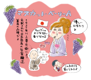 1927年川上善兵衛により交配された日本固有の生食醸造兼用の品種だよ。優しい口当たりよ。キャンディのような甘い香りなのよ。このままでも食べられるよ